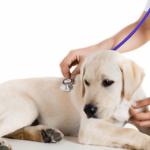 Farmaci ad uso veterinario.. farmaci generici!