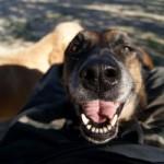 Aspetti comportamentali del Cane anziano