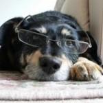 Stress sul posto di lavoro?  La soluzione è il cane!