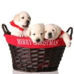 Natale…tempo di regali.