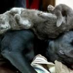 Animali domestici in città: la riforma del condominio
