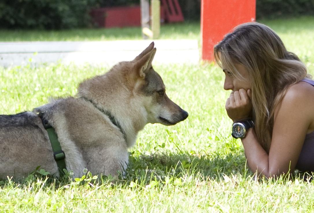 Tag educazione e addestramento cani for Educazione cane