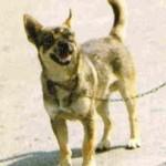 L' amore di un cane è per sempre: la storia del cane Fiorino.