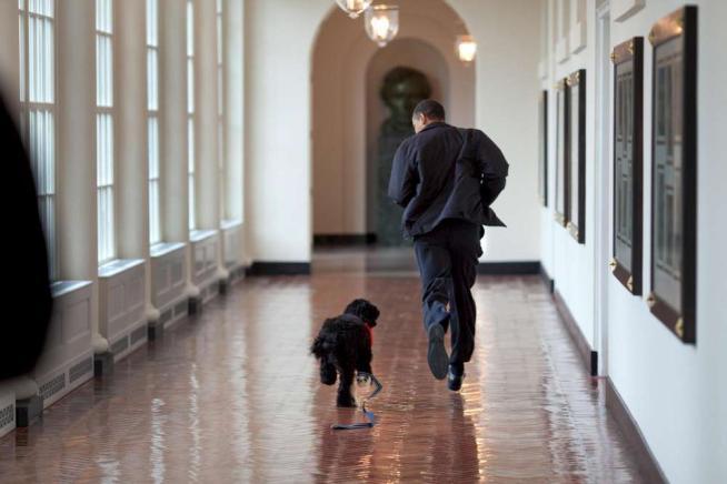 Il presidente Obama mentre corre per i corridoi della Casa Bianca con il suo cane Bo.