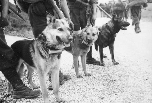 cani per il servizio di collegamento