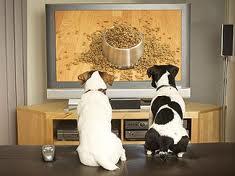 perché, invece di piazzare anche i nostri cani davanti alla televisione come facciamo con i nostri figli, non prendiamo un guinzaglio e due palline e non andiamo a giocare? O perché invece non ci andiamo a fare una passeggiata insieme ai nostri cuccioli a due e a quattro zampe?