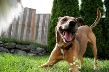 Un cane è un cane. Sembra una banalità ma un cane ha bisogno di vivere una vita da cane!