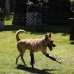 """""""Milagros caninos"""" ovvero """"miracoli canini"""". In Messico apre il primo centro di recupero per cani maltrattati."""