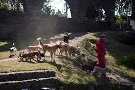 Il centro non ha gabbie perchè quello di cui hanno bisogno questi cani è vivere una vita dignitosa, con tanto spazio per rilassarsi e giocare, circondati da persone che li curano e che gli danno l'amore che fino a quel momento non hanno mai ricevuto.