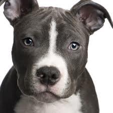 """Noi immaginiamo un dolce cucciolo, con la sua camminata insicura, i movimenti goffi, la sua inesauribile energia e la sua voglia di giocare. Loro vedono una futura """"macchina da guerra"""" da mandare a combattere."""