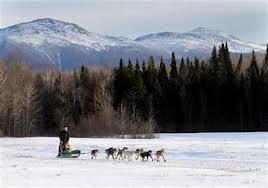 Questo tipo di cane è nato per correre, è nato per lo sled dog, o più comunemente la corsa con i cani da slitta.