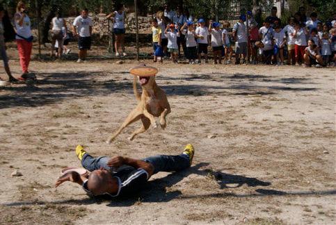 Michele ha iniziato a praticare il Disc Dog con Ade, un Pitbull di 11 anni (ora ne ha quasi 14) che, anche e soprattutto attraverso la pratica sportiva, è riuscita a superare momenti davvero complessi dal punto di vista comportamentale.