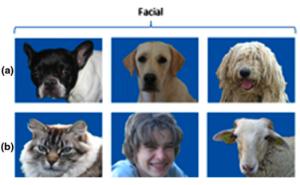 Tutte le volte che il cane identificava il volto di un altro cane l'istruttore lo premiava.