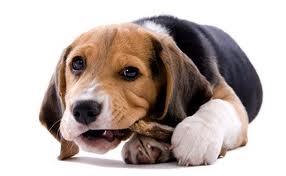 molte persone sono disinformate o male informate sull'alimentazione del cane e sui prodotti per animali