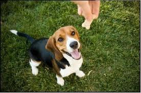 Quante volte ci è capitato di dare al nostro amico a quattro zampe uno snack per cani?