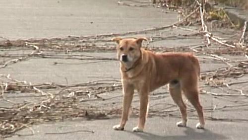 cane.fukushima 3