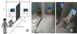 il cane doveva andare verso uno dei due schermi e posare la sua zampa su una tavoletta poggiata davanti agli schermi e poi tornare al posto di partenza.