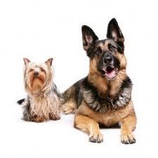 Ma i cani possono riconoscere un loro simile soltanto guardando l'immagine di un altro cane anche se di razza diversa?