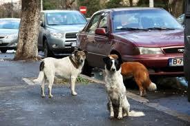 """I """"maїdanezi"""" o semplicemente """"cani senza padrone"""" sono una scottante realtà in Romania."""