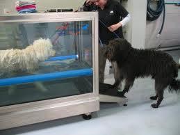 per alcuni cani è necessaria la riabilitazione in acqua