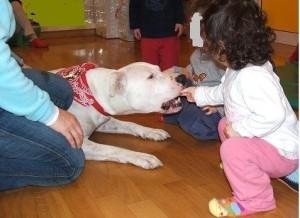 Artù, american staffordshire, ane da pet therapy che, insieme alla sua compagna Laura dell'Associazione Atena di Perugia, ha lavorato con gli anziani malati di alzheimer e con i bambini delle scuole elementari.