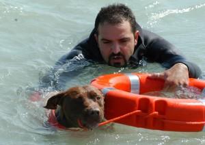 Yagho, fermano doc, primo pitbull in Italia e in Europa ad essere brevettato come cane da salvataggio nautico.