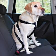 Quando ho comprato la cintura di sicurezza per il mio cane ho avuto fin da subito le sensazione di aver fatto centro: ecco una cosa fantastica e utile per il mio amico a quattro zampe.