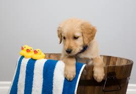 """Chi vive in casa con un cane avrà detto almeno una volta """"voglio il mio cane pulito e profumato!"""""""