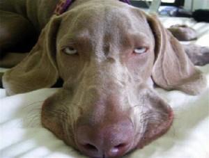 cane e stress
