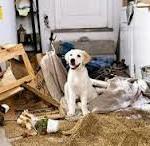 """Naturalmente non vorrei che una famiglia che non ha saputo educare il proprio cane o un proprietario pigro risolvessero le loro difficoltà con un """"Ah, ma è tipico della sua razza! Non ci possiamo fare niente""""."""