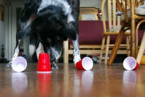 Il proprietario dovrebbe presentare al cane un solo gioco per volta partendo dal più facile (sulle diverse confezioni troverete scritto il livello di difficoltà...ma potete anche trarre spunto e costruire i vostri giochi di attivazione mentale in casa, purché siate accorti nel farlo).