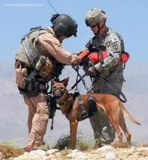 I cani vengono utilizzati durante i combattimenti come veri e propri soldati.