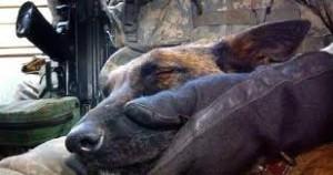 """I conduttori considerano i loro cani come veri e propri """"membri delle forze armate"""" e non come semplice equipaggiamento."""