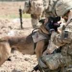 I cani non sono oggetti, vivono, respirano e provano emozioni. E' arrivato il momento di dare a questi eroici pelosi un posto d'onore!