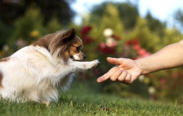 Il cane infatti ci invia continuamente dei segnali, di disagio, tranquillità, piacere, felicità, che sono lo specchio di un'emozione o di uno stato corrispondente all'interno di noi stessi.