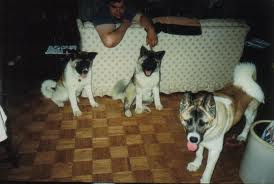Le cucciolate sono monitorate non in funzione del benessere della razza ma in funzione dell'aggressività dei soggetti.