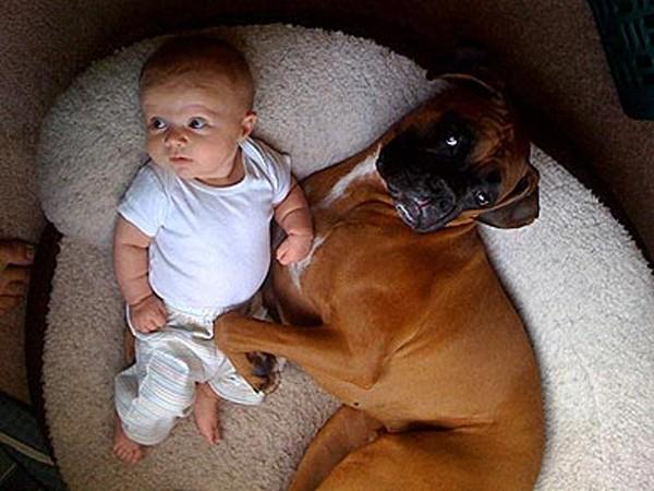 Da un punto di vista etologico, quella che per un cane è una reazione normale, può essere vista da noi come aggressiva o minacciosa nei confronti del bambino e, di fatto, può avere delle conseguenze anche molto serie.