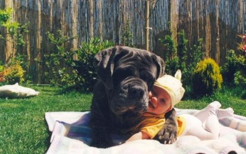"""Naturalmente, più il cane è grande e più il bimbo sembra piccolo e questo, in linea di massima, suscita un """"Ooooh ma che cariiiini!""""."""