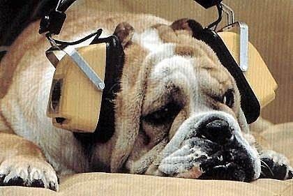 Essendo che siamo tutti immersi in un grande campo elettromagnetico e che il suono è vibrazione, quindi energia e informazione, se urliamo informiamo (vale a dire diamo forma) malamente il nostro cane.