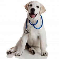 Secondo uno studio americano pubblicato sulla rivista Pediatrics, i bambini che sono a contatto con i cani sono meno soggetti alle otiti e alle infezioni alle vie respiratorie rispetto a quelli che vivono senza.