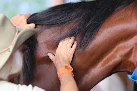 Linda notò che vi era una connessione tra il tocco e la guarigione, e cominciò ad applicare i tocchi sui cavalli che non erano a loro agio nei loro corpi, né fisicamente né emotivamente.