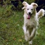 Le nostre energie potremmo impiegarle per passare del tempo di qualità con i nostri cani.