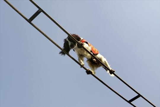 Chiediamoci perché, almeno apparentemente, i cani sembra abbiamo più facilità di noi nell'avere, dimostrare e manifestare coraggio?