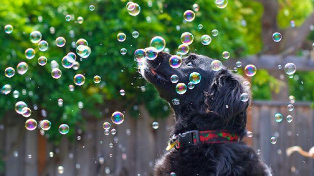 La componente ludica ha una grande importanza anche per il cane adulto, perché attraverso il gioco si ricrea collaborazione e cooperazione nelle interazioni sociali.