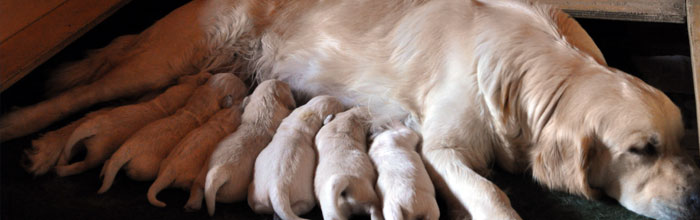 """Qual è il primo apprendimento del cucciolo? Che cosa è """"altro"""" per un cucciolo di pochi giorni? Quale rapporto lo collega alla madre?"""