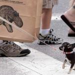 Il cane insegna: coraggio!
