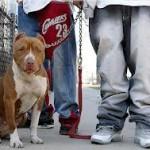 Questa tipologia di cani viene presa proprio per la sua capacità di intimorire gli altri.