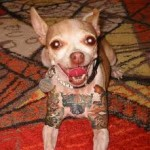 Cani tatuati: una nuova moda?