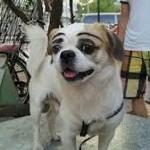 perchè ci sentiamo in diritto di coinvolgere il cane nelle mode umane?