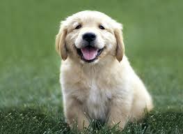 Cerchiamo di vivere il nostro cane a pieno e amiamolo per quello che è lasciando stare tatuaggi, piercing e altro!